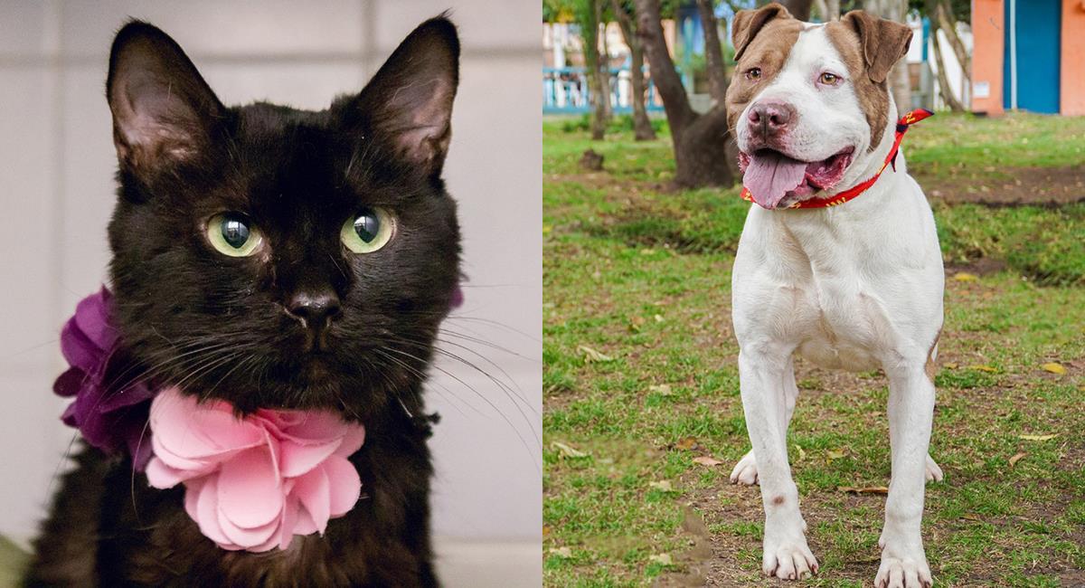 Regresan las jornadas presenciales de adopción de mascotas en Bogotá. Foto: Comunicaciones IDPYBA