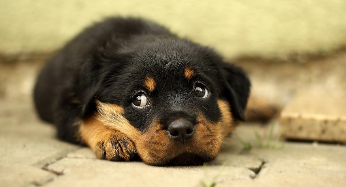 Maltrato animal: le disparó a un inocente perro y ahora paga las consecuencias. Foto: Pixabay