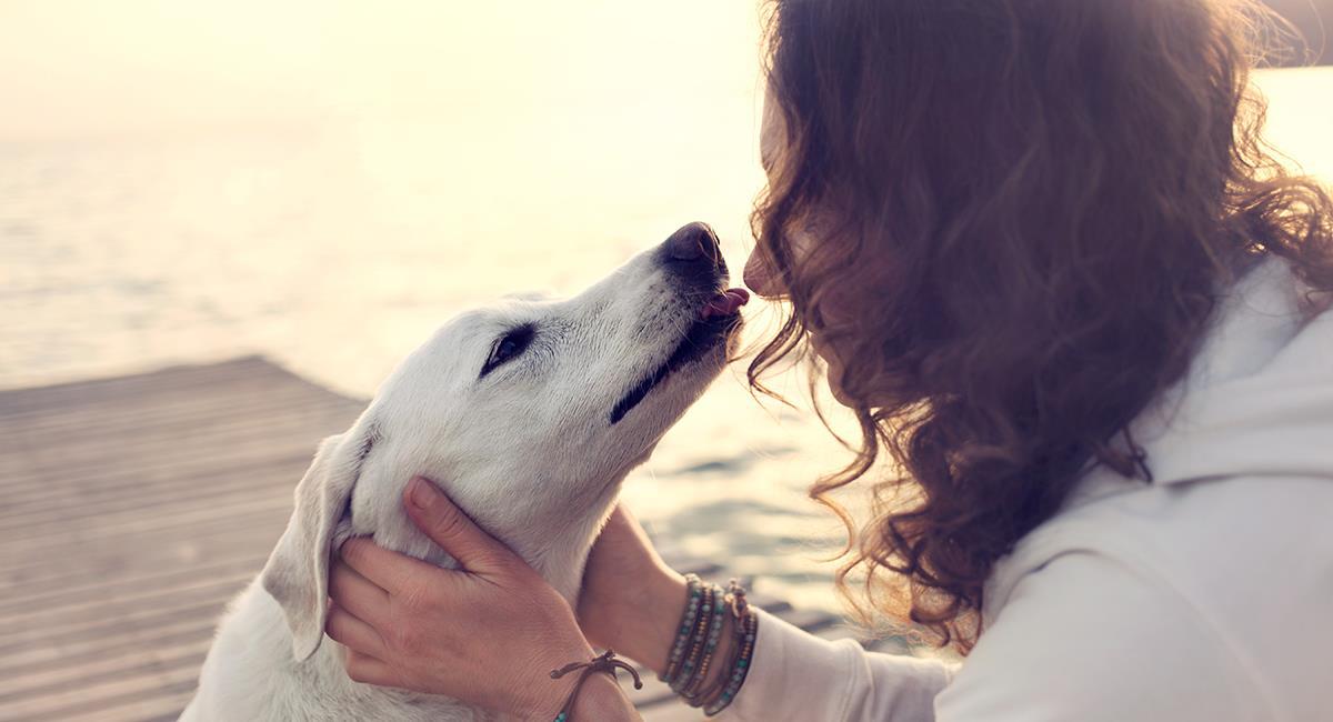 Mascotas amorosas: estos son los 5 perros más cariñosos y leales del mundo. Foto: Shutterstock