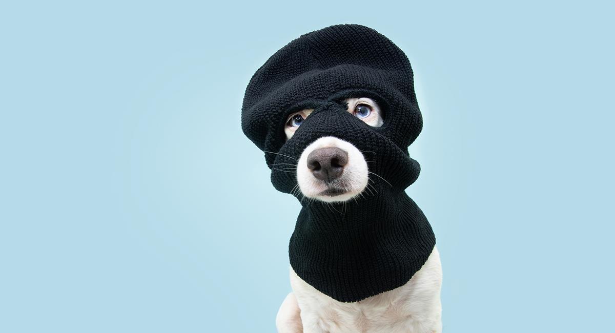 """Video: perro es sorprendido """"hurtando"""" comida en un D1. Foto: Shutterstock"""