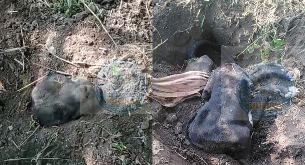 Luto canino: Murió el perro que fue enterrado vivo en Tolima. Foto: Twitter @HolyAnn3