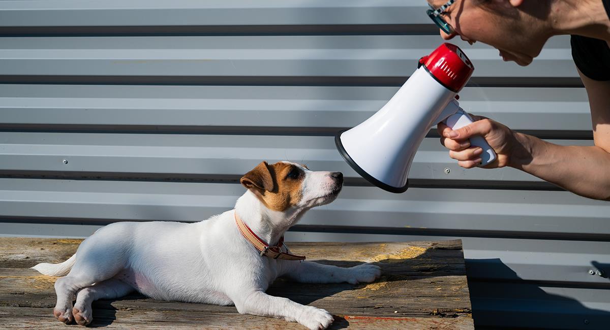 Estudio revela las desastrosas consecuencias de educar a un perro con gritos. Foto: Shutterstock