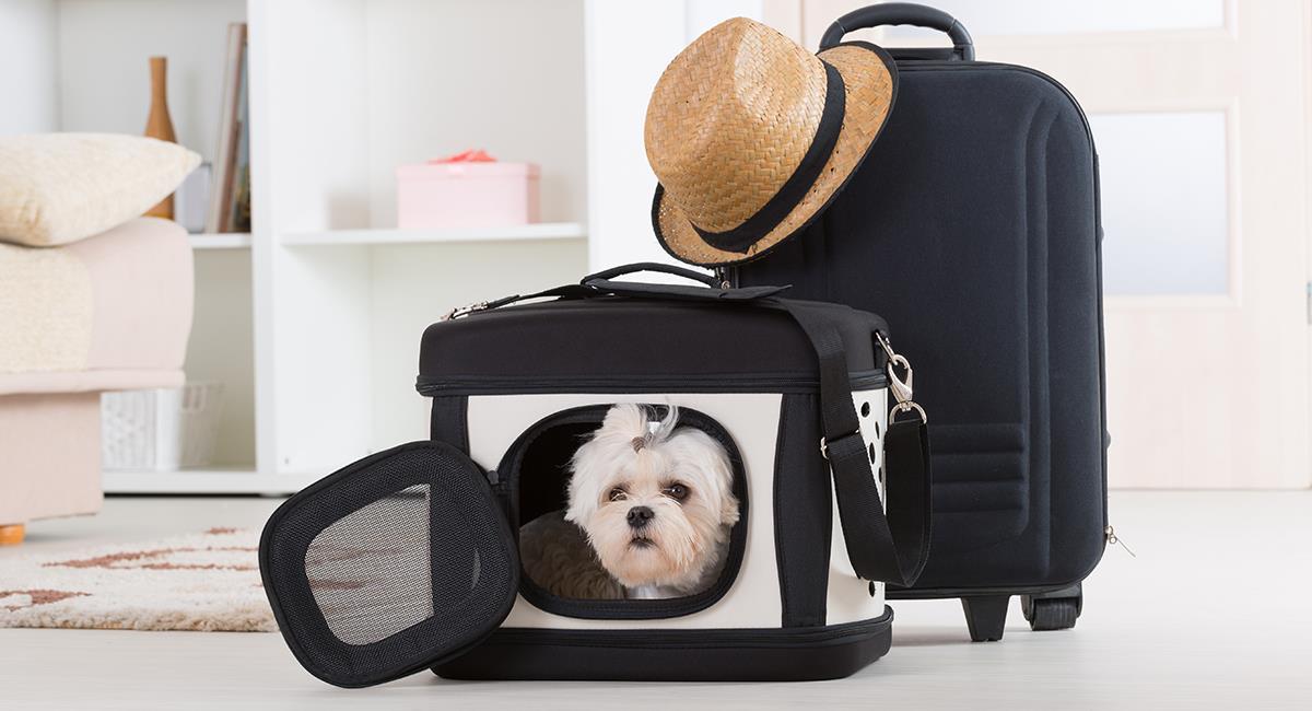 4 cosas que debes hacer para poder viajar con tu mascota. Foto: Shutterstock