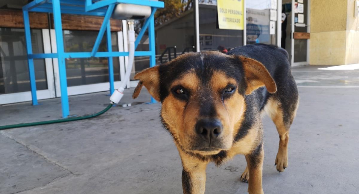 Perro lleva un mes esperando a su dueño fallecido por COVID-19. Foto: Facebook @SinFronteraMagazine