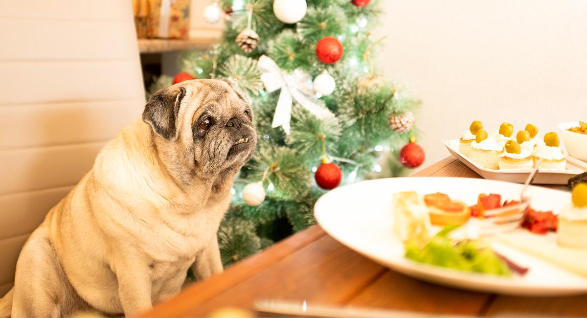 Estos 7 ingredientes usados en Navidad son muy peligrosos para tu mascota. Foto: Shutterstock
