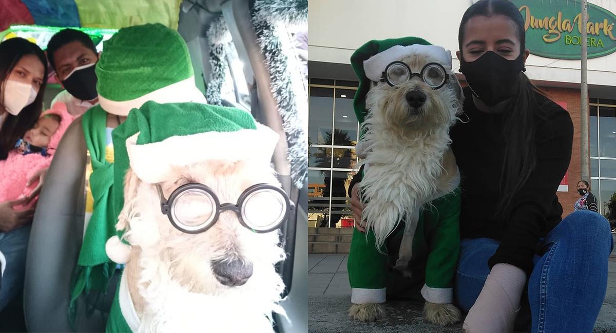 Coronel, el perro que recorre las calles de Bogotá en un taxi vestido de Papá Noel. Foto: Instagram @azul1012