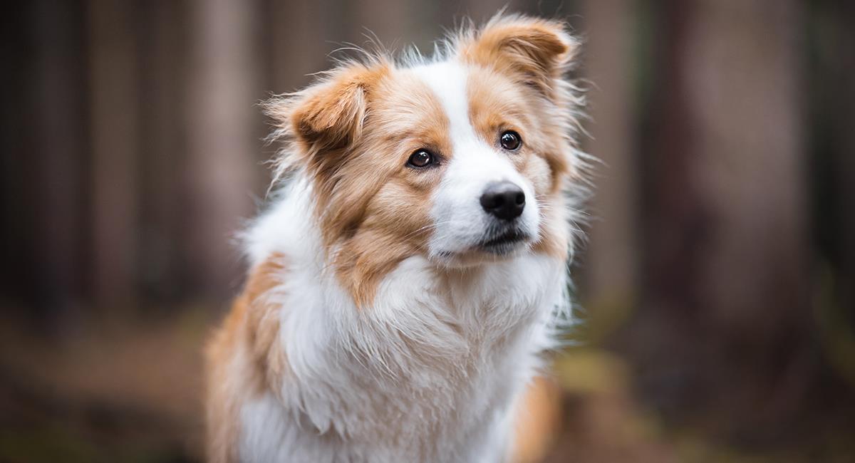 Estas son las 7 supersticiones más curiosas relacionadas con perros. Foto: Shutterstock