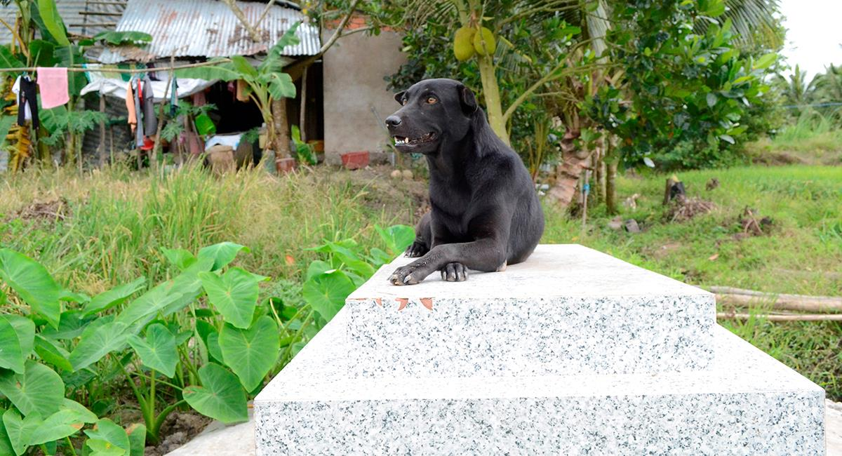 Mino, la perrita fiel que no se separa de la tumba de un niño. Foto: EFE