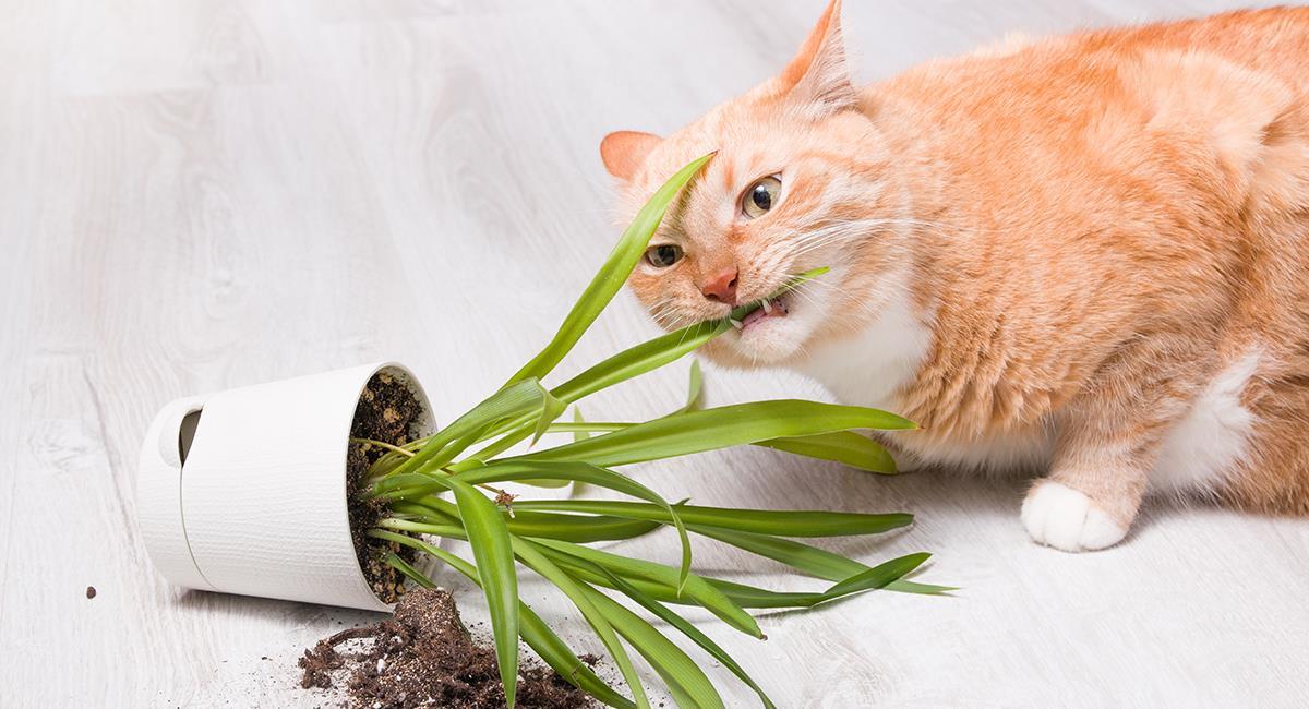 ¿Qué hacer si tu gato acaba con las plantas de la casa?. Foto: Shutterstock