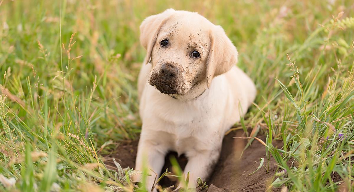 Así fue el asombroso rescate de una perrita que duró 30 horas en un agujero. Foto: Shutterstock