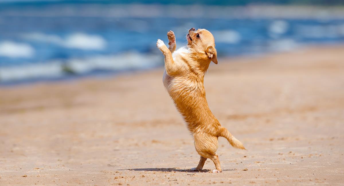 Perro divierte en redes por sus originales pasos de baile. Foto: Shutterstock