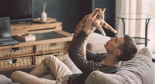 Conoce los mejores beneficios de tener un gato en casa
