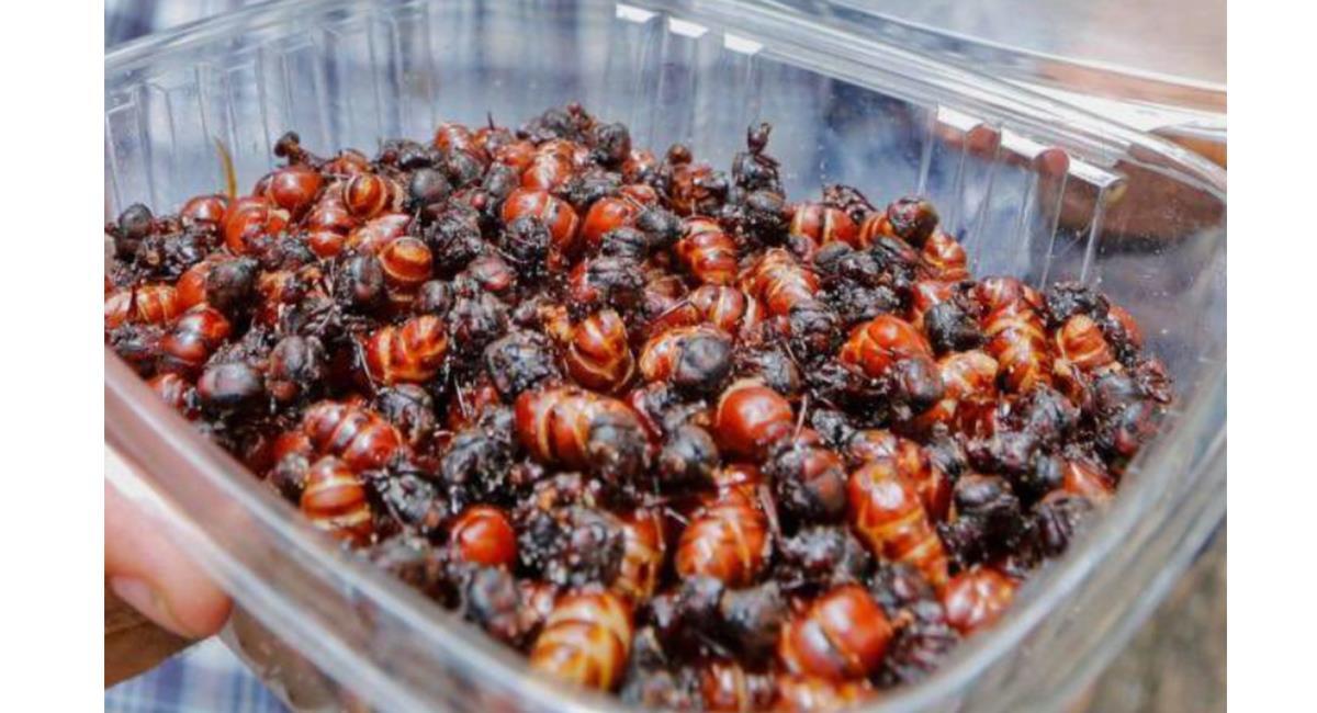 Los insectos tienen una carga de proteína alta y aceites esenciales. Foto: Twitter @Bangtandelicate