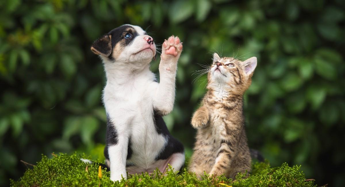 La única prevención contra la rabia es la vacuna. Foto: Shutterstock