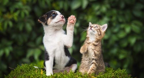 Rabia en perros y gatos: Cómo proteger a nuestras mascotas de este peligroso virus