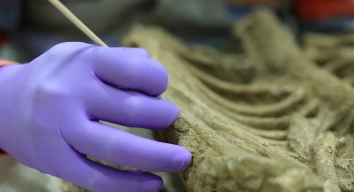 El lote de piezas arqueológicas tienen representación de la época prehispánica en Colombia. Foto: Twitter @Orozco_angela