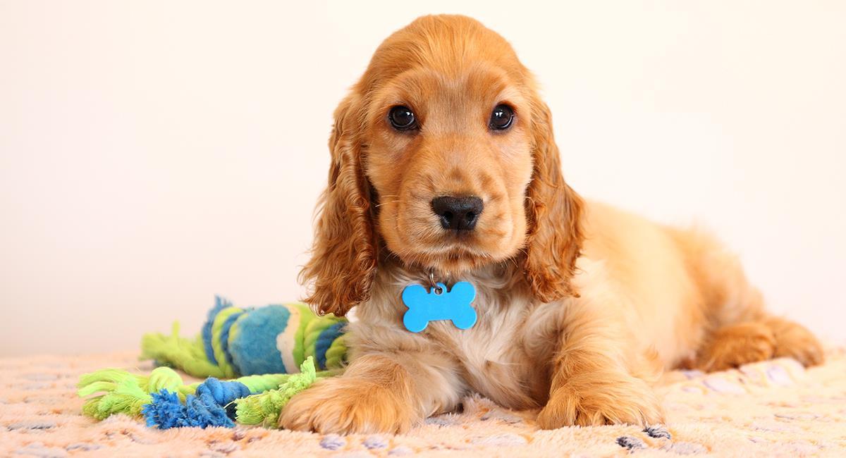 Estos nombres para mascotas fueron tendencia en el 2020. Foto: Shutterstock