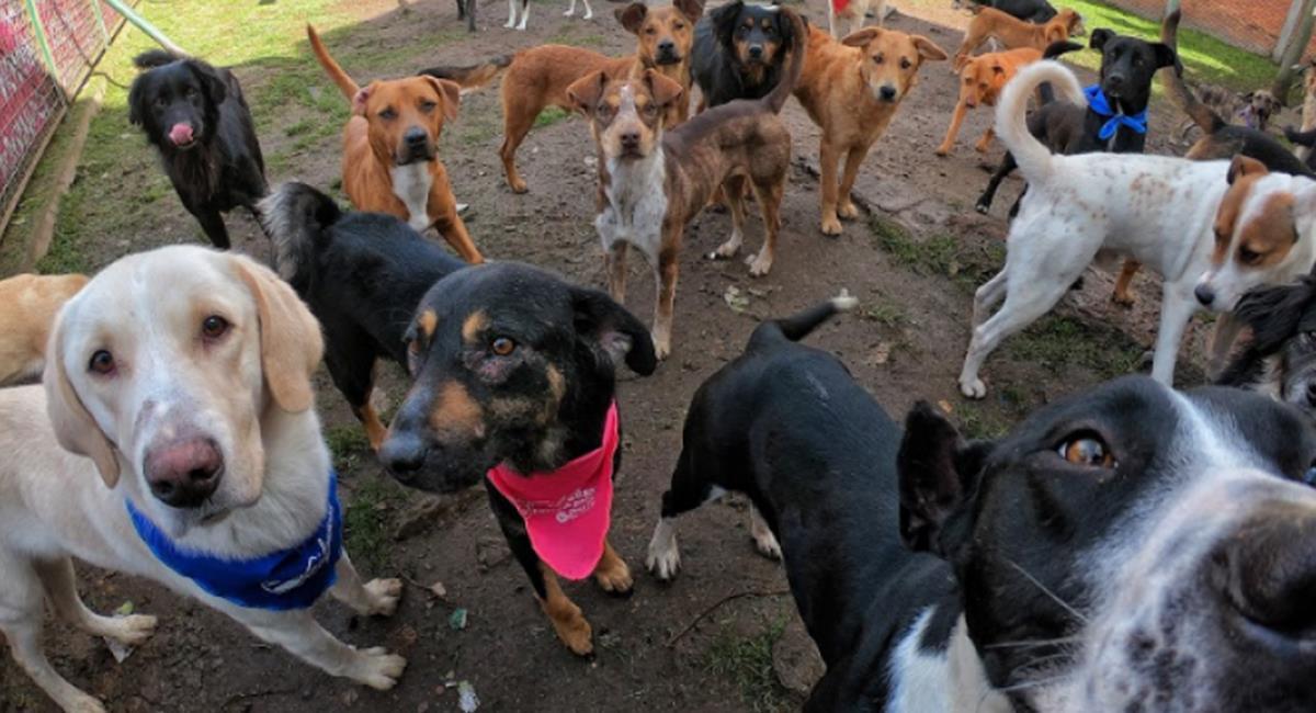 Adopción virtual de mascotas: este es el proceso que debes seguir. Foto: Twitter @AnimalesBOG