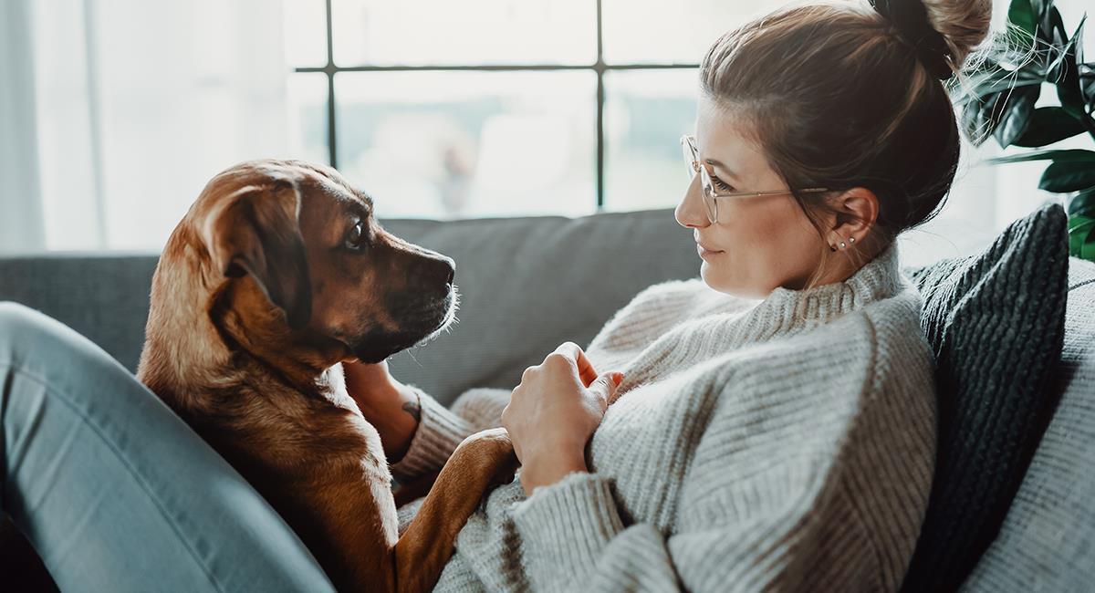 Estudio afirma que tener perro puede protegerte del COVID-19. Foto: Shutterstock