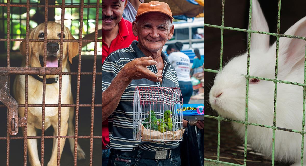 Prohíben la venta de animales vivos en plazas de Bogotá. Foto: Pixabay
