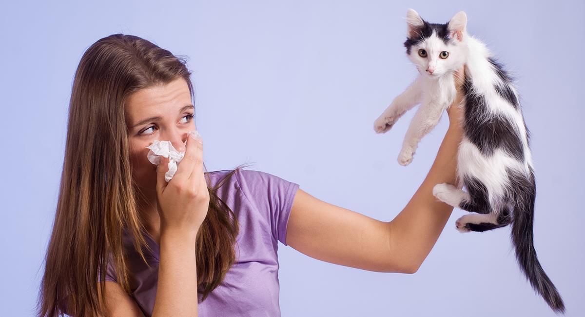 ¿Qué gatos puedes tener si sufres de alergias?. Foto: Shutterstock