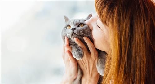 Mejora el vínculo con tu gato con estos 4 divertidos juegos