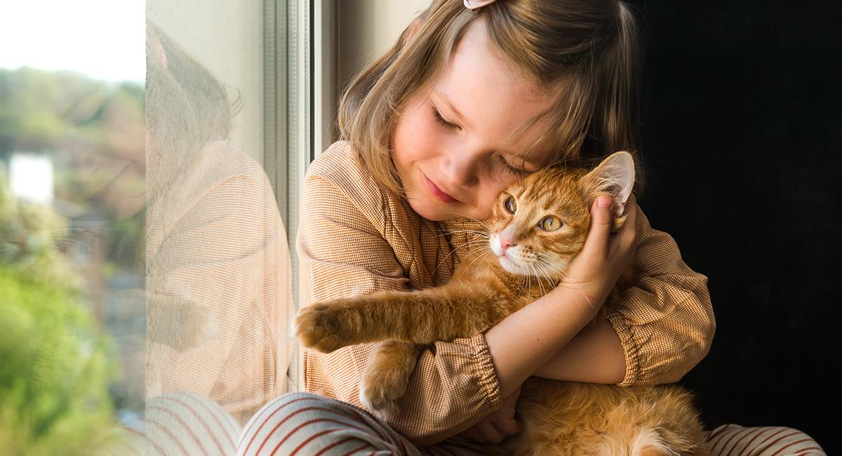 3 razas de gatos perfectas para las familias que tienen niños. Foto: Shutterstock