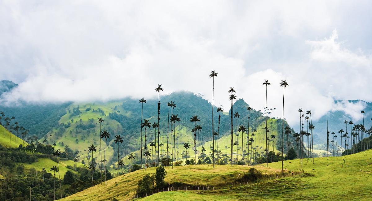 """El Valle del Cocora entre los favoritos por los colombianos """"por su atención y amabilidad"""". Foto: Pexels"""