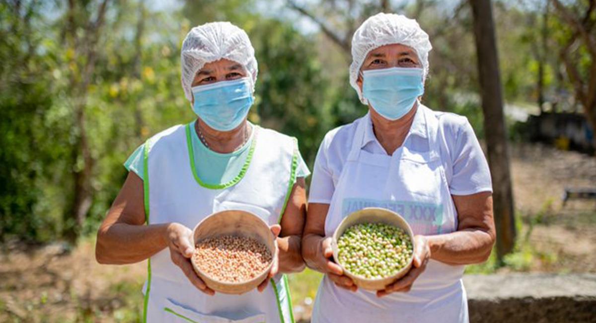 El Guandú es uno de los granos con más proteína que existe. Foto: Twitter @AlcaldiaBaranoa