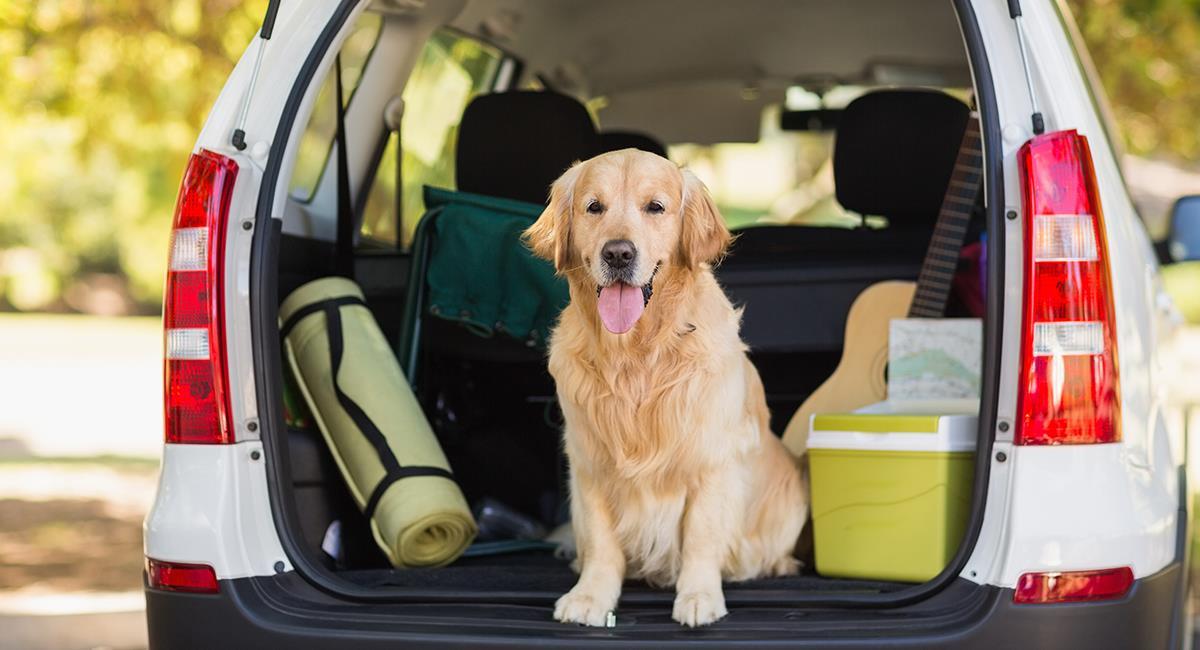 Consejos para viajar con mascotas en Semana Santa. Foto: Shutterstock