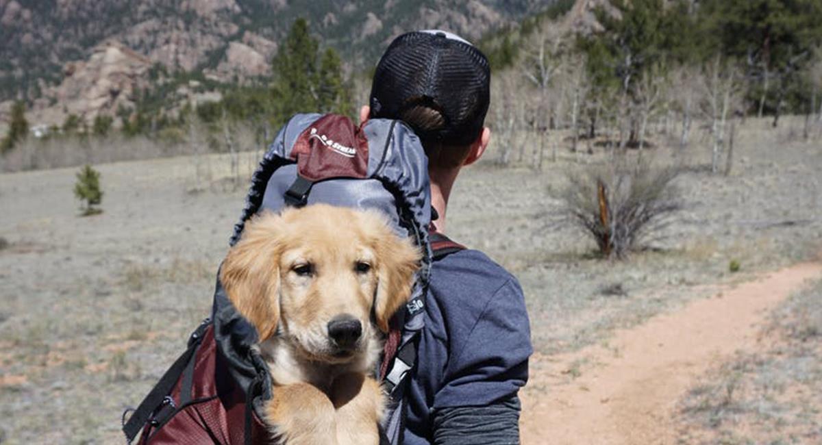 """Los colombianos pueden """"descartar o aceptar"""" un viaje, según las comodidades para su mascota. Foto: Pixabay"""