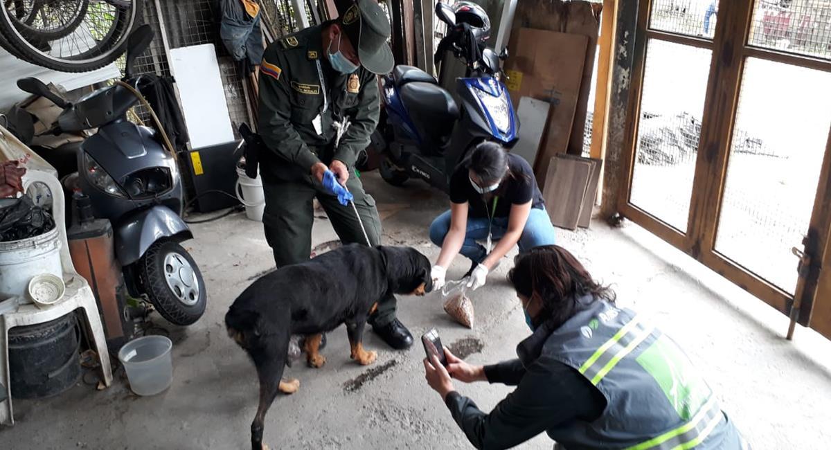 Reportan caso de maltrato animal e indignante respuesta de la Policía. Foto: Twitter @PoliciaMedellin