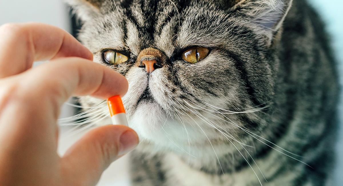 Adiós a los arañazos: 5 increíbles trucos para darle una pastilla a tu gato. Foto: Shutterstock