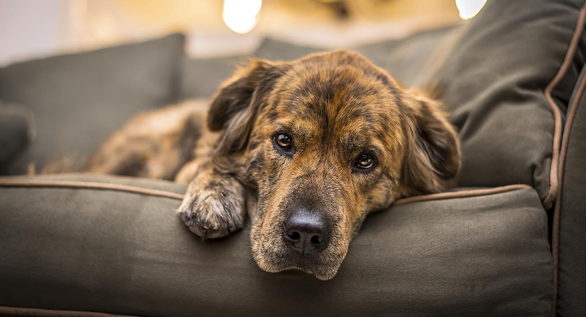 Esto es lo que revela el color y la consistencia del vómito de tu perro. Foto: Shutterstock
