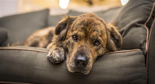 ¿Qué quiere decir el color y la consistencia del vomito de tu perro?
