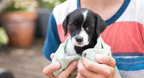 ¿Qué debes saber si es la primera vez que tienes un perro?