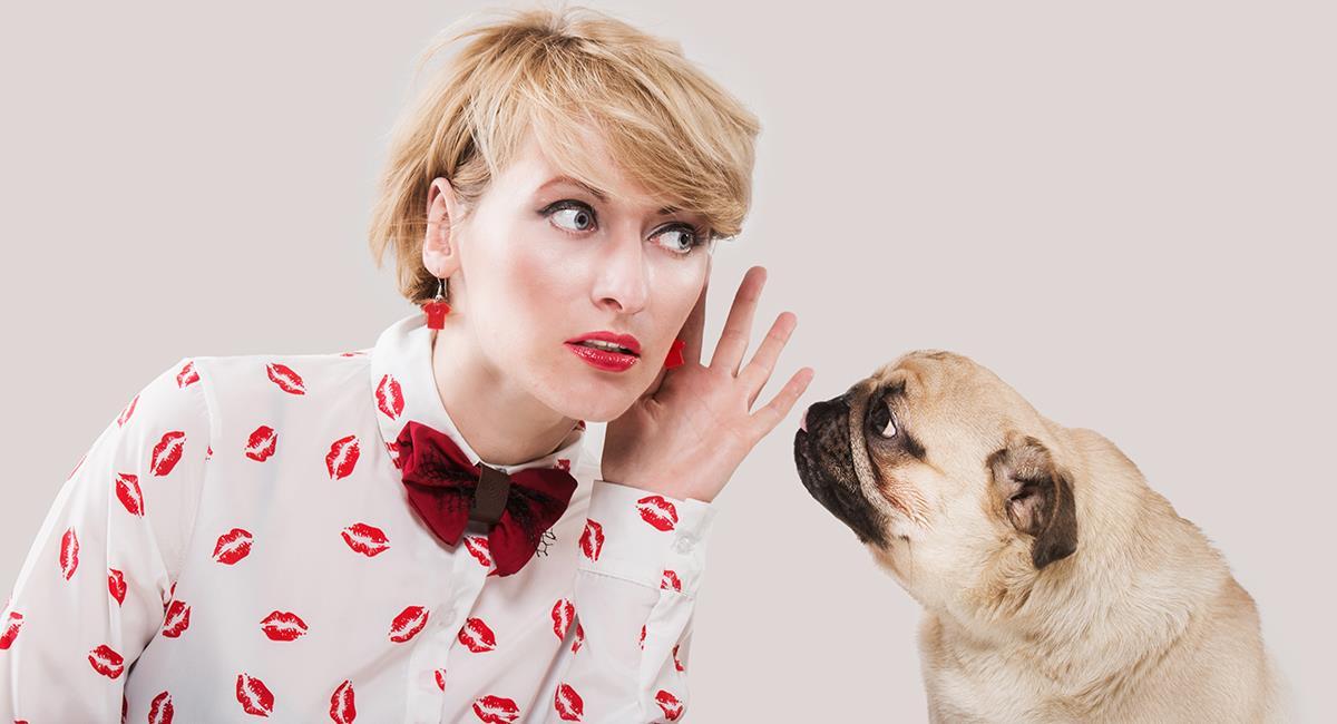 Qué quiere tu mascota: lanzan el primer traductor para perros. Foto: Shutterstock