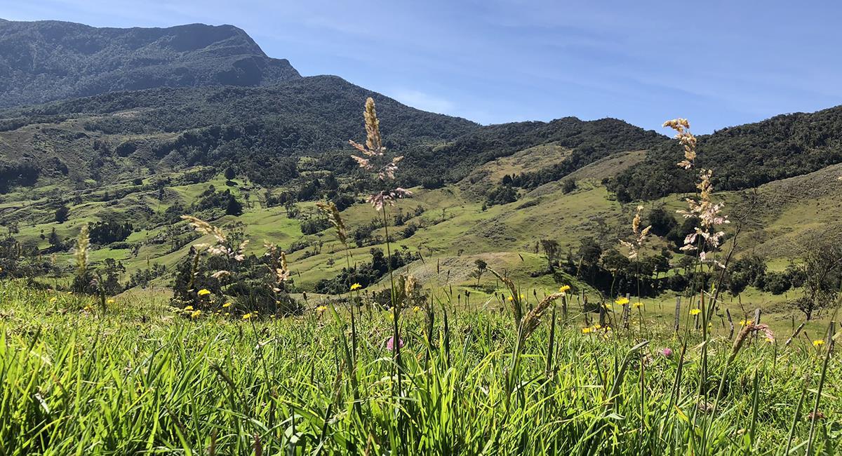 El Parque Natural Tamá es una de las reservas con mayor riqueza hídrica del país. Foto: Twitter @JAIVZAR