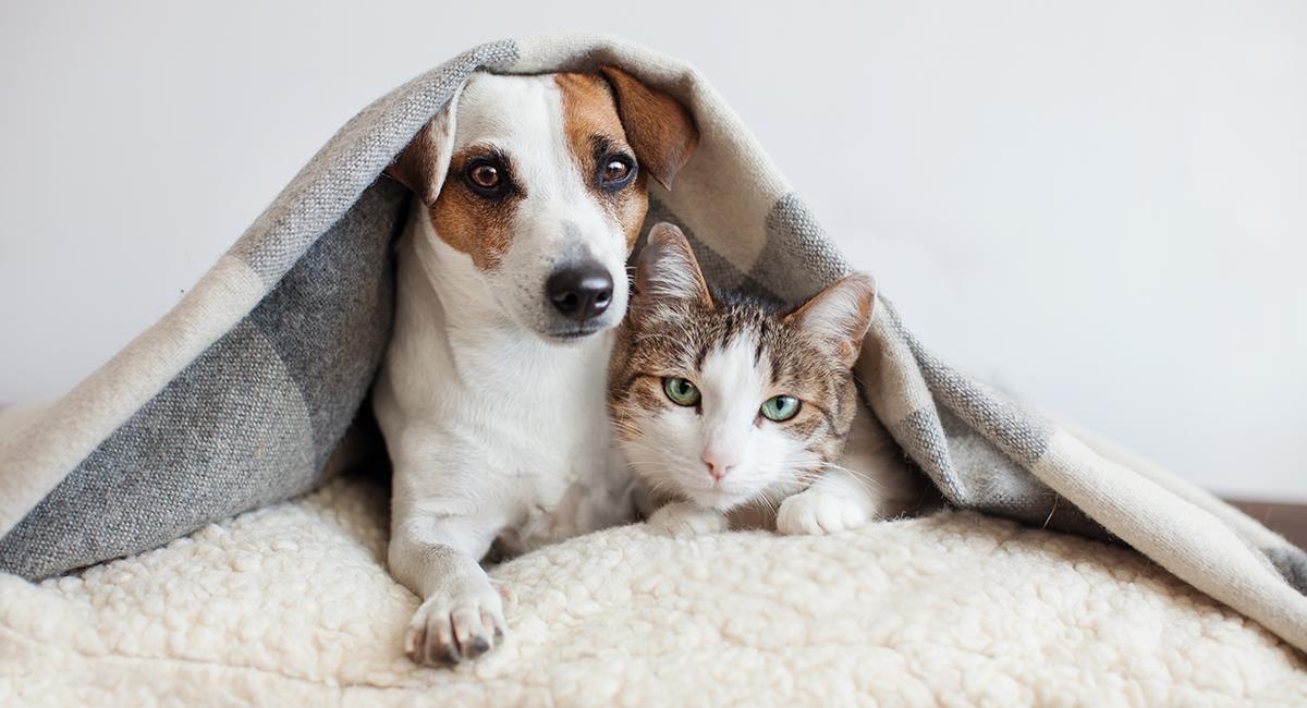 Mascotas en invierno: 5 importantes cuidados que debes tener en cuenta. Foto: Shutterstock