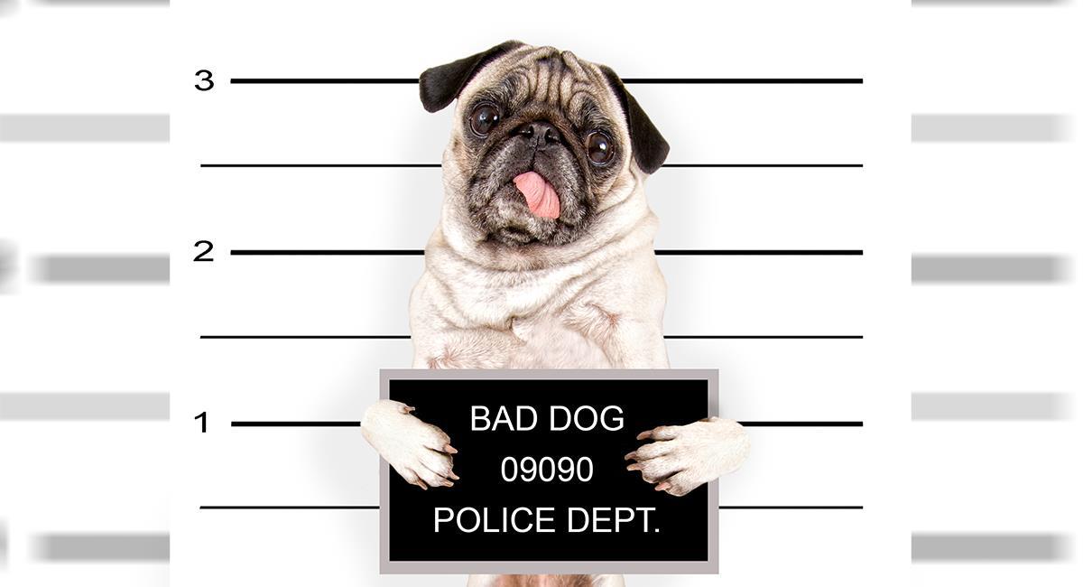 Detienen a un perro que pasaba cartas entre los presos de una cárcel. Foto: Shutterstock