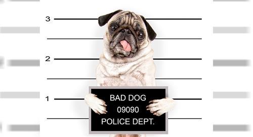 Perro ayudaba a los presos de una cárcel a pasarse cartas