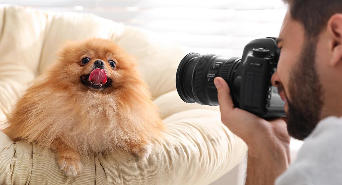 Como un supermodelo: 4 formas de lograr una foto perfecta de tu perro. Foto: Shutterstock