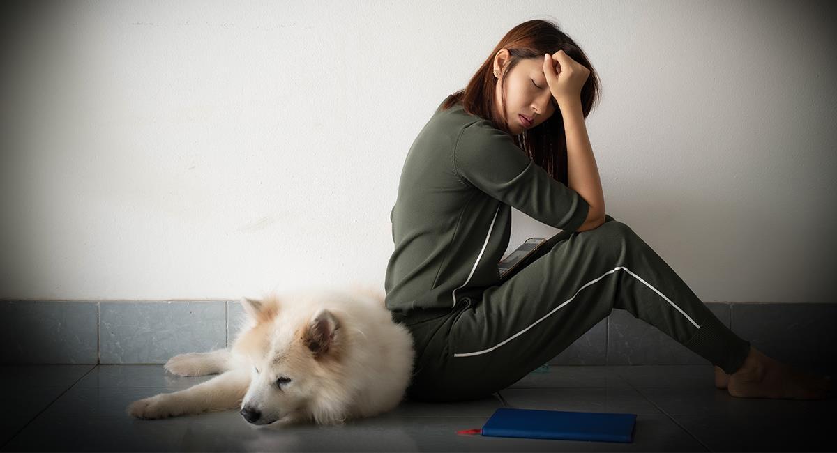 El nivel de estrés de los perros está relacionado con el de sus dueños. Foto: Shutterstock
