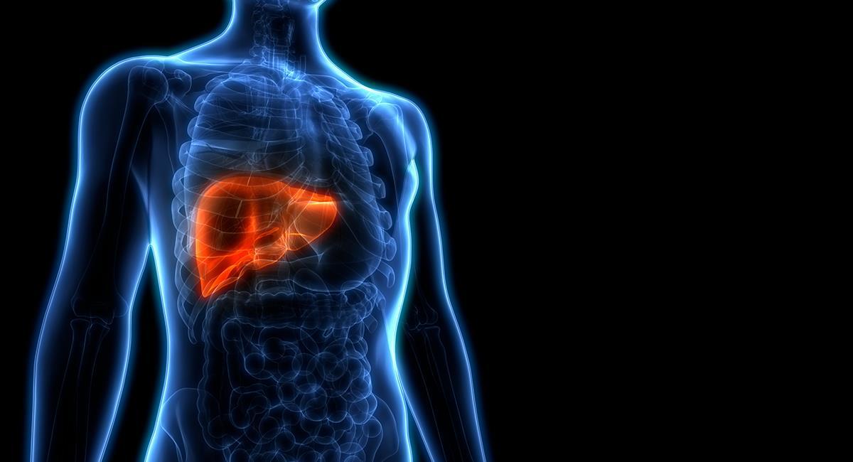 Enfermedad silenciosa: puede que padezcas hígado graso sin haberlo notado. Foto: Shutterstock