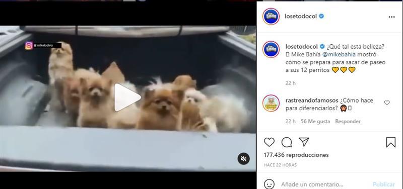 Plan de Mike Bahía con los 12 perros de Greeicy Rendón para demostrar que es un «papá cool»