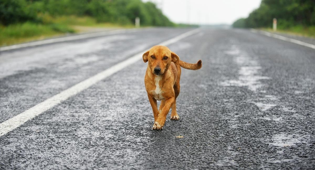 Accidente en la vía: perro atropella a un hombre y ahora es popular en redes sociales. Foto: Shutterstock