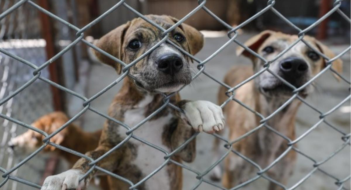 16 personas han sido imputadas por maltrato animal. Foto: World Animal Protection