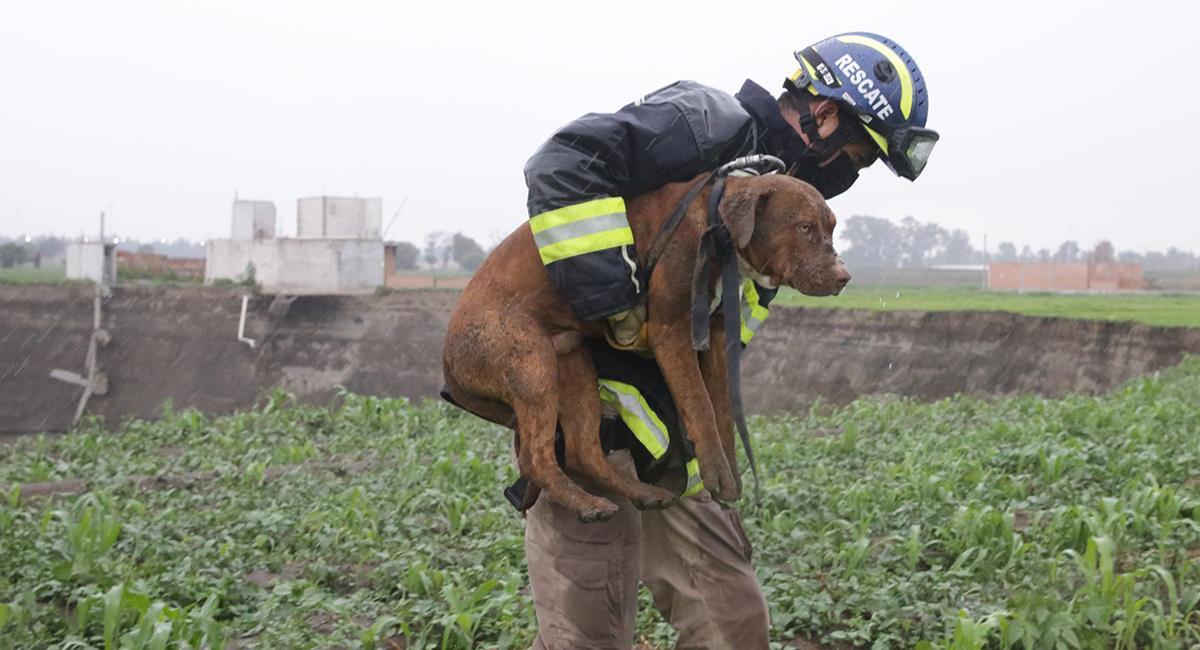 Dos perros fueron rescatados en un misterioso hoyo que sigue creciendo. Foto: Twitter @Gob_Puebla
