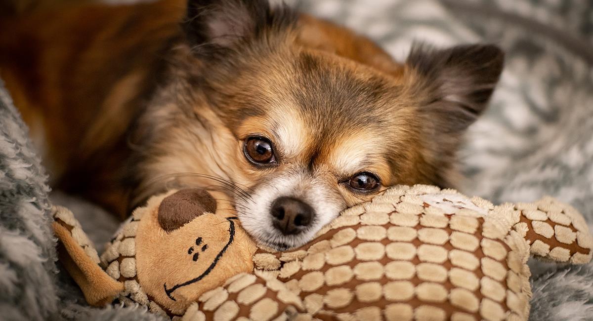 5 conductas problemáticas de tu perro que debes corregir de inmediato. Foto: Pixabay