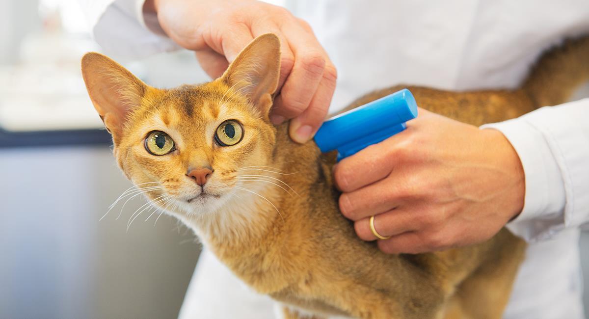Vuelve la implantación gratuita de microchips a mascotas en Bogotá. Foto: Shutterstock